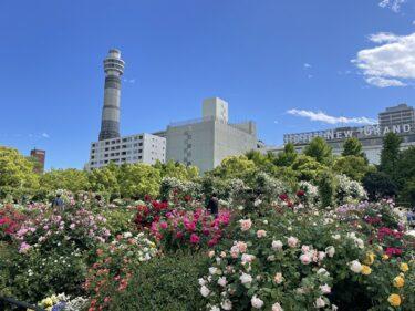 バラが見頃の『港の見える丘公園』と『山下公園』横浜ガーデンネックレス2021開催中!